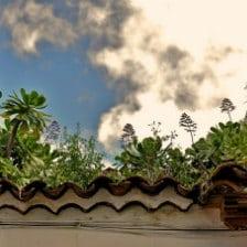 Enrique Medina, tejado de Agaete, a living rooof in Gran Canaria, vegetalisierter Dach auf den Kanaren