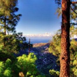 Maik Julemann, vue de la Vallée d'Agaete entre les pins, Agaete's view from the mountain, der Tal von Agaete aus den Bergen