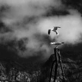 Andrea Moretti, seagulls and the Tamadaba, Möwen in Agaete, mouettes de Canaries