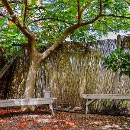 Enrique Mesa, Un coin pour se ressourcer, the perfect spot to unwind, bajo la sombra del flamboyán de la casa rural El Patio de Agaete, die perfekte Ecke für eine Digital Detox