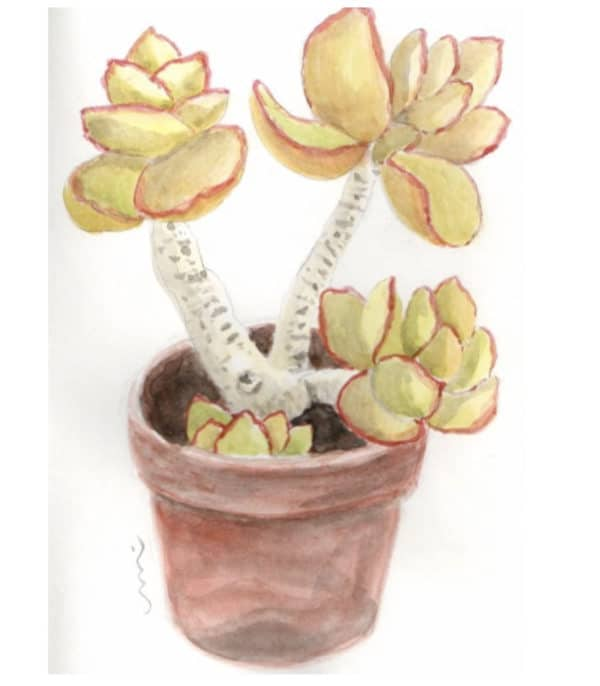 Kaktusblumentopf in der Finca El Patio, maceta de la casa rural El Patio de Agaete, pot avec cactus peint en Grande Canarie, watercolor painting in house for renting in Gran Canaria
